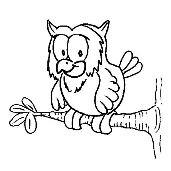 600x599 Owl On A Tree Branch Coloring Page