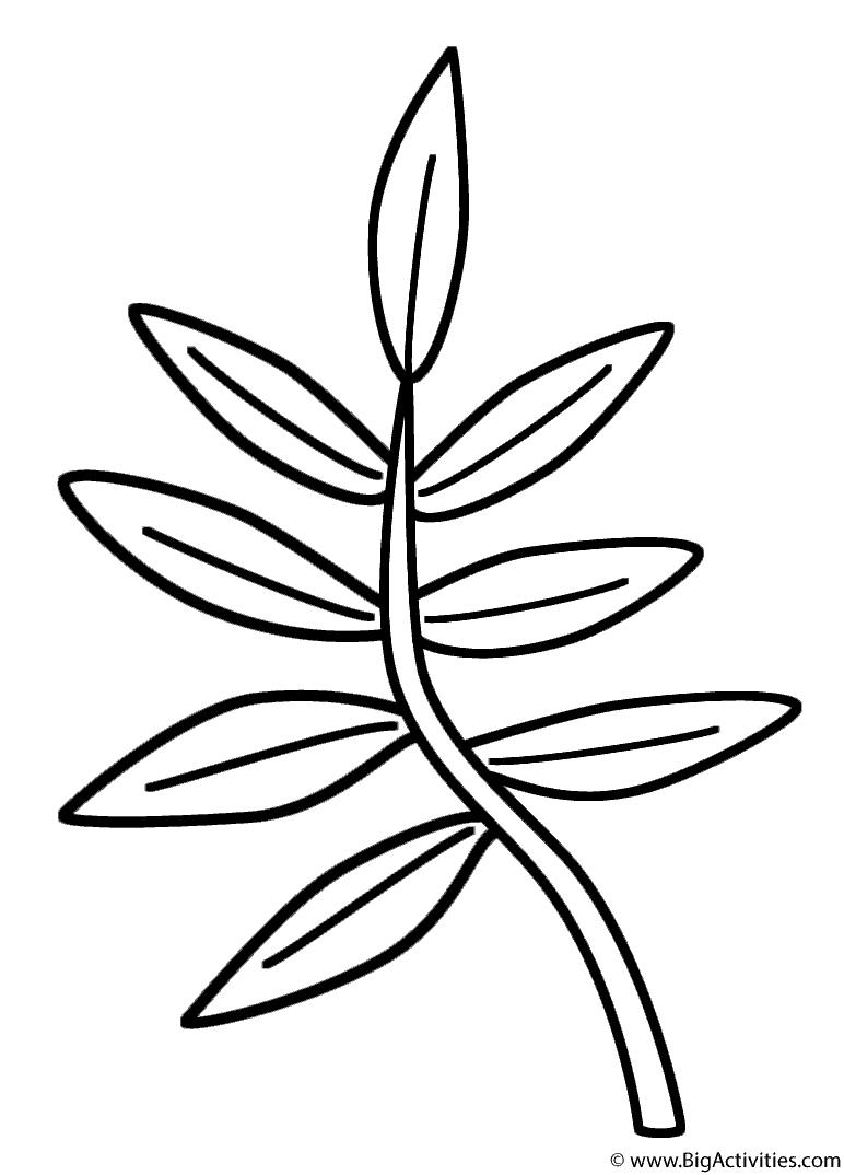 772x1074 Branch