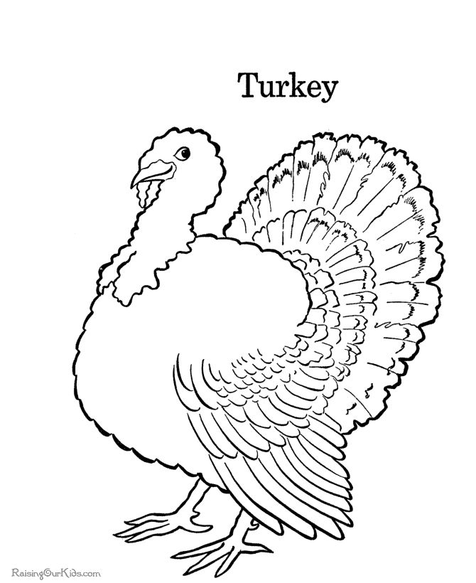 Coloring Pages Of Turkeys For Preschool