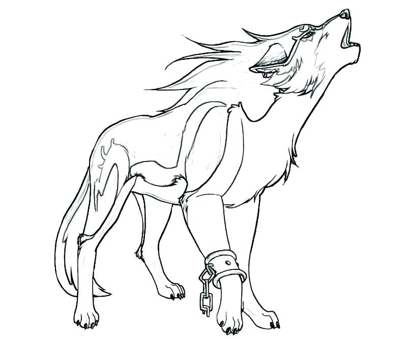 800x667 Coloring Pages Wolves Latest Realistic Wolf Coloring Page