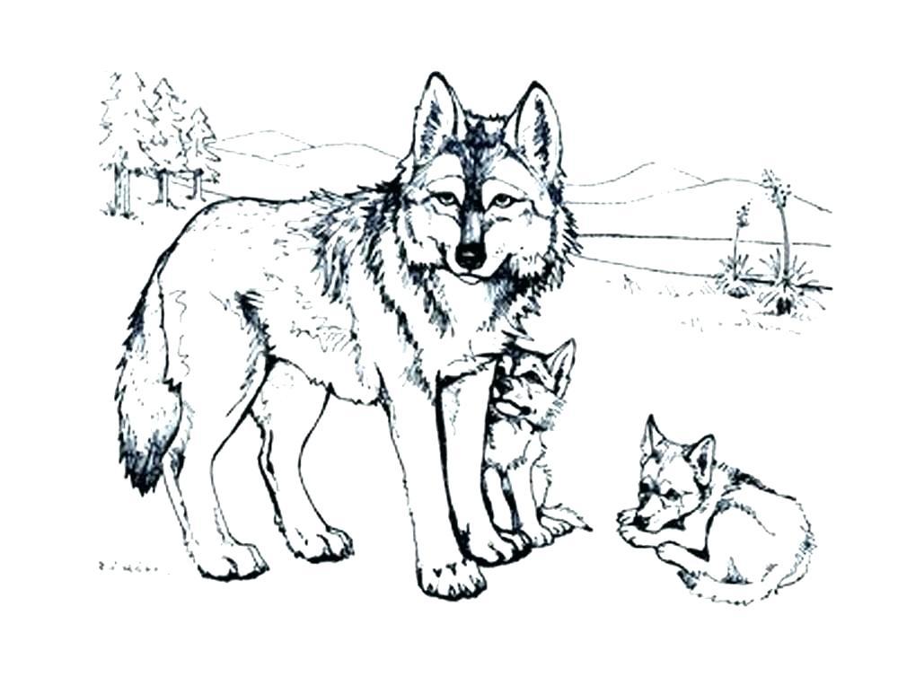 1000x773 Wolf Pup Coloring Pages Winged Wolf Coloring Pages Wolf Coloring