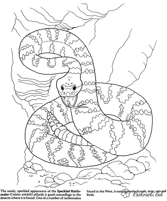 650x780 Forest Animals Free Coloring Pages Online Print Coloring Pages