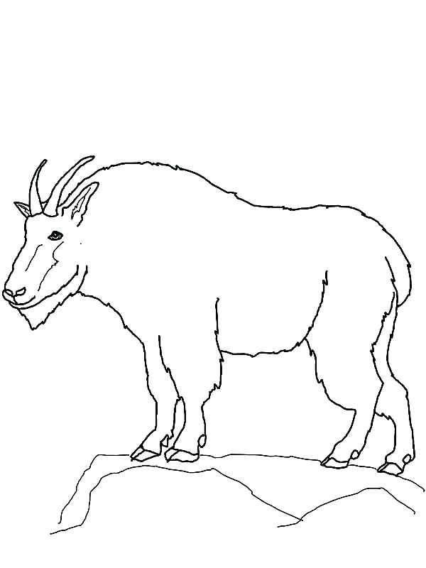 600x800 Mountain Lion Coloring Page Mountain Coloring Page Mountain Goat