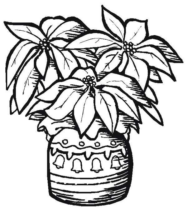 600x669 Pottery Poinsettia Coloring Page Color Luna