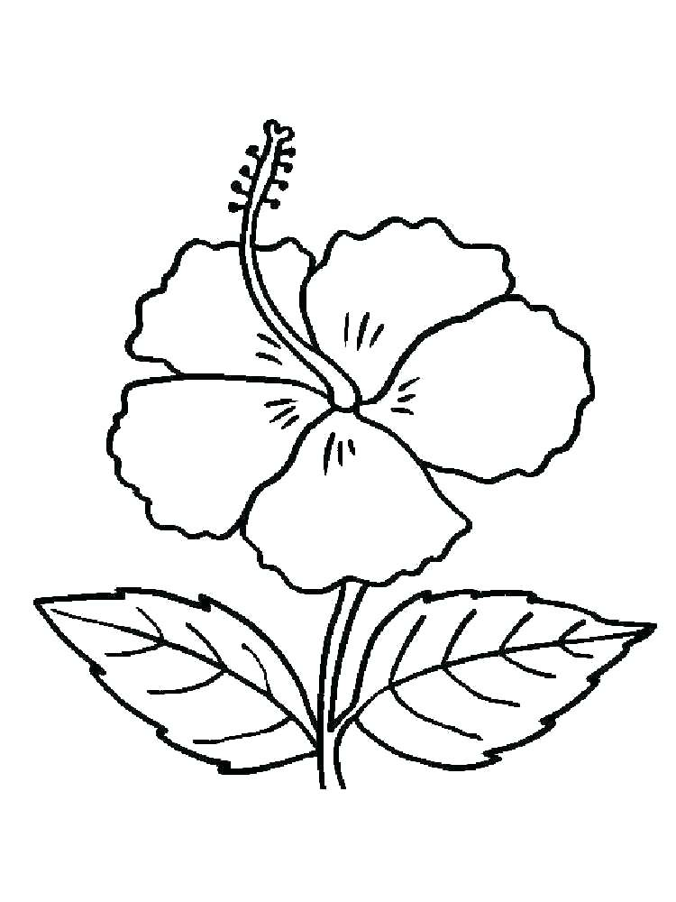 Coloring Pages Poinsettia Flower at GetDrawings | Free ...