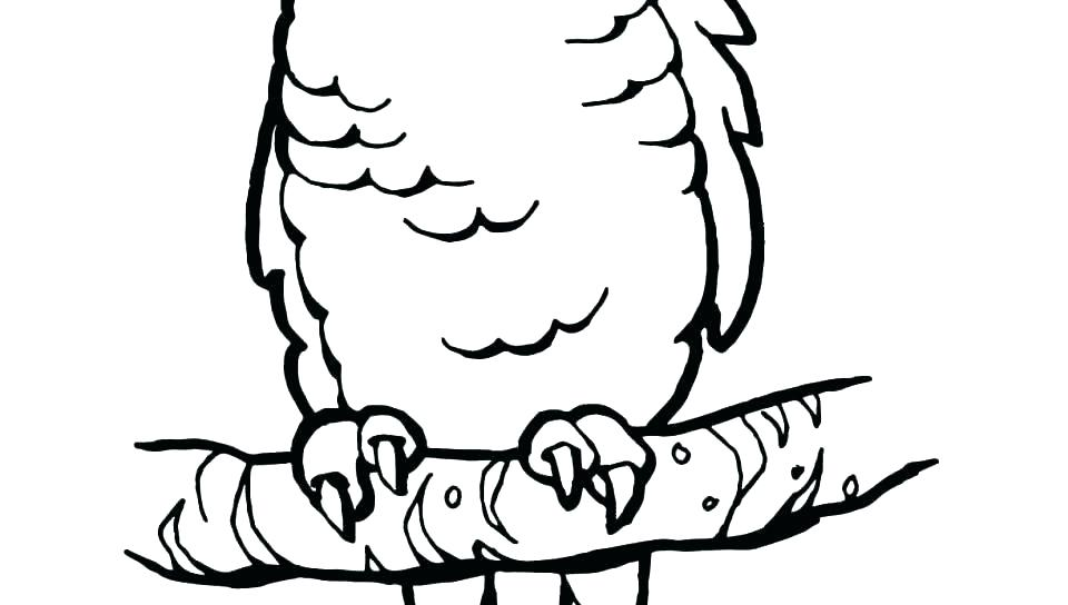 960x544 Parrot Coloring Sheet Parrot Coloring Page Parrot Coloring Sheets