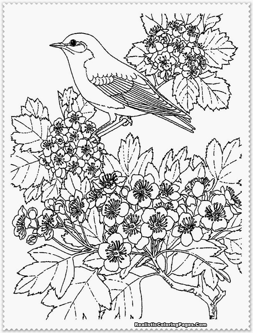 810x1066 Realistic Coloring Pages Fresh Realistic Coloring Pages Images