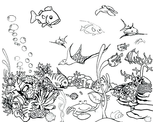 600x480 Realistic Fish Coloring Pages Tropical Fish Coloring Page Tropical