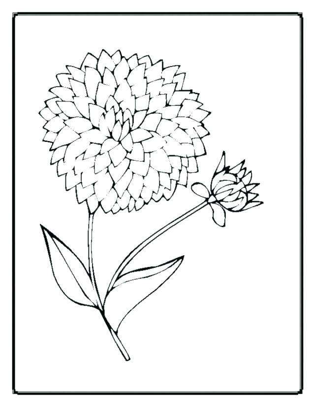 640x826 Realistic Flower Coloring Pages Realistic Flower Coloring Pages