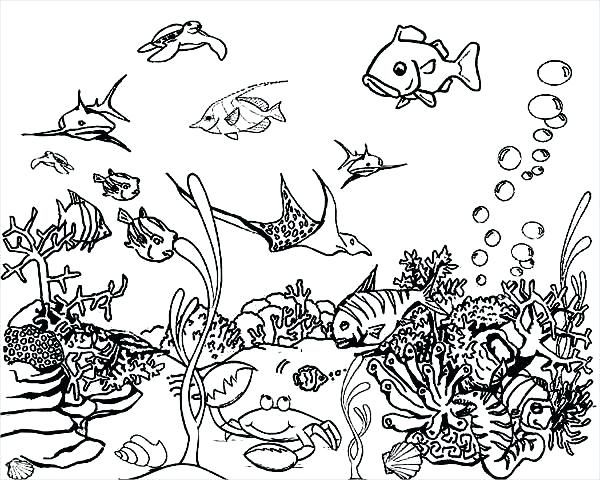 600x480 Sea Coloring Pages