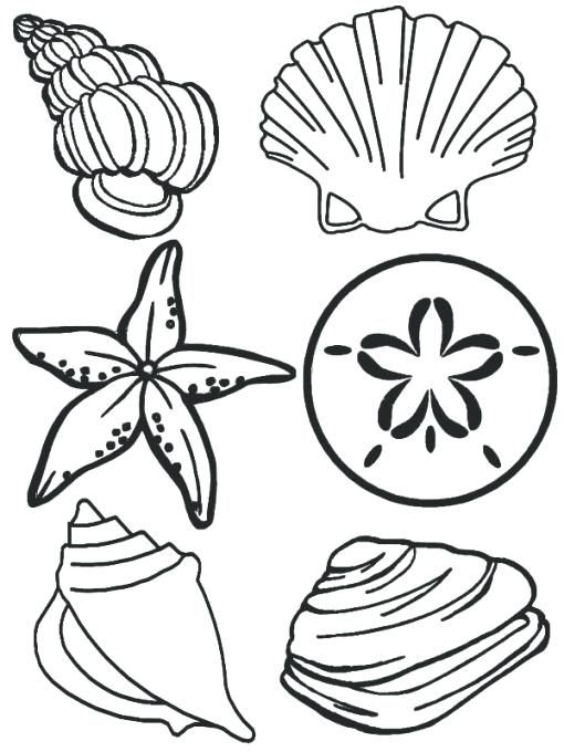 510x680 Sea Shell Coloring Page Sea Animals Complete Sea Shells Family