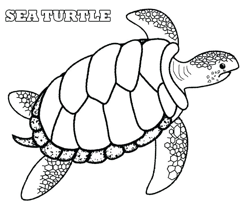 850x731 Sea Shell Coloring Page Sea Shells Coloring Pages Extraordinary