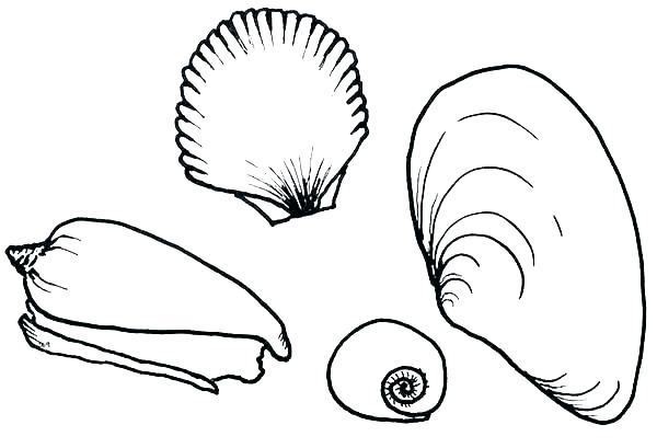 600x409 Sea Shell Coloring Page Seashell Coloring Page Seashells Coloring