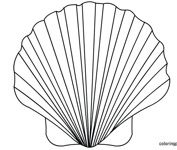 678x575 Sea Shell Coloring Pages Sea Shell Coloring Page Inspirational Sea