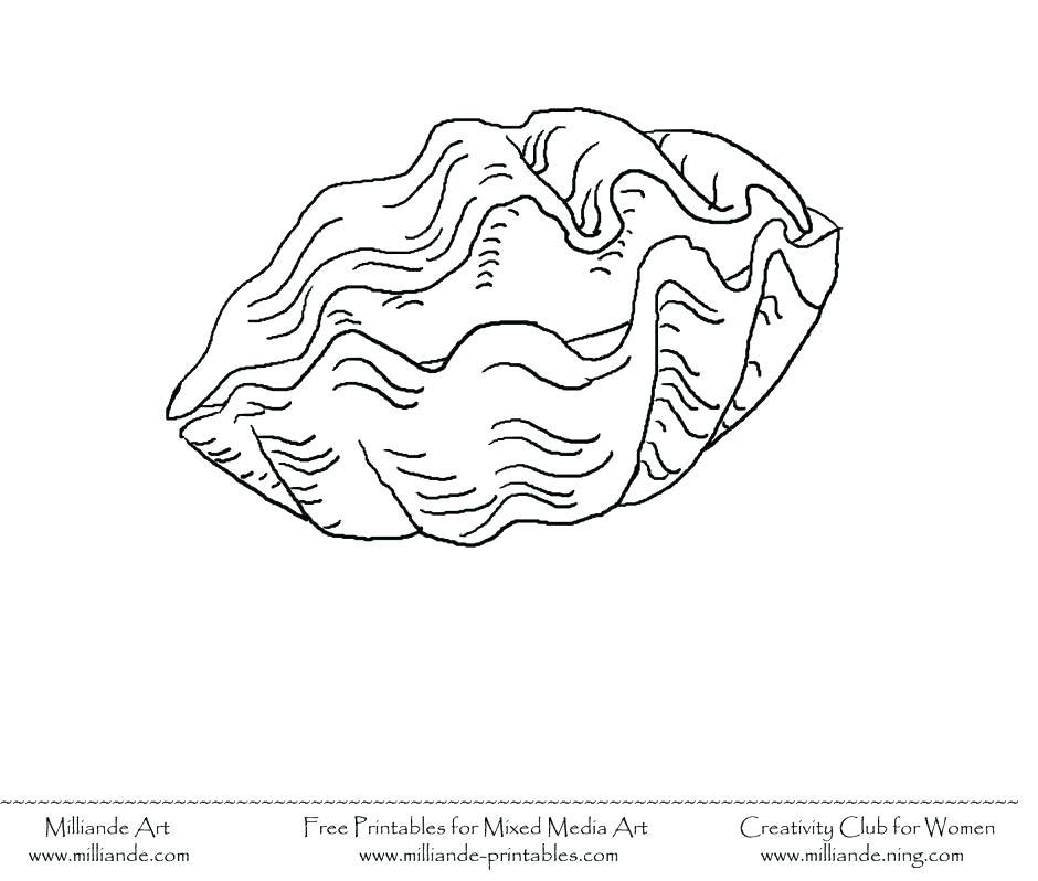 940x798 Sea Shell Sheets Sea Shells Coloring Pages Seashell Coloring Page