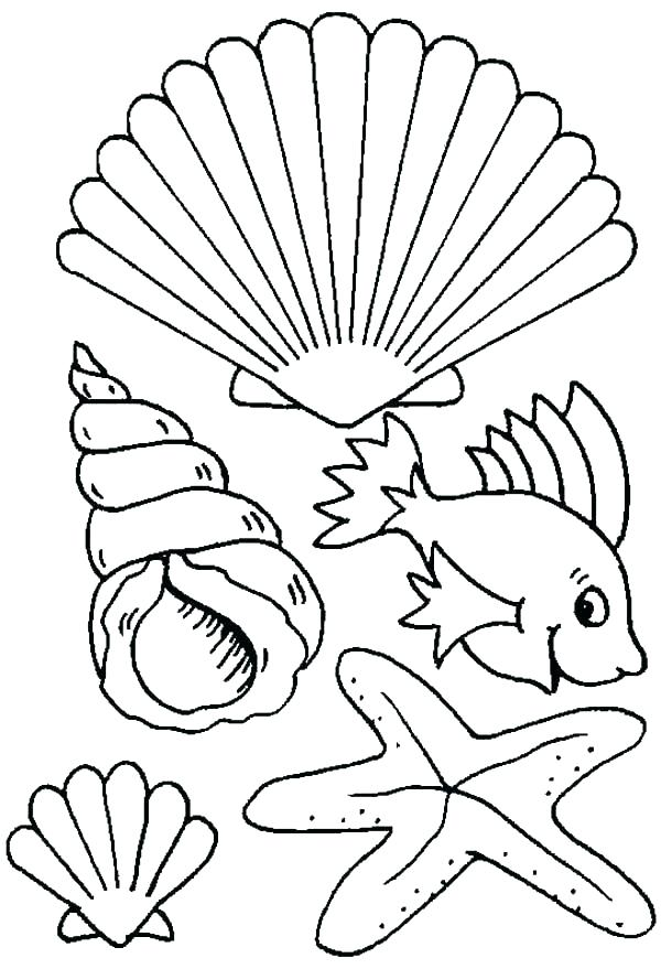 600x879 Seashell Coloring Page Glamorous Sea Shell Pages Print Shells Kids