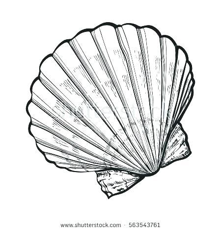 450x470 Seashell Coloring Page Seashell Coloring Pages Sea Shell Coloring