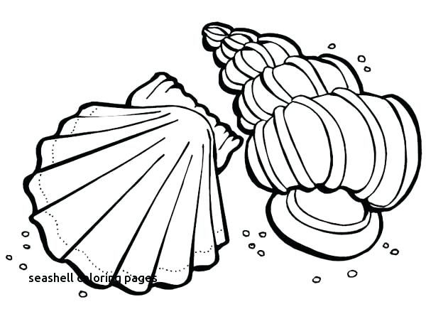 600x442 Seashell Coloring Pages Photo Gallery Of Summer Beach Coloring