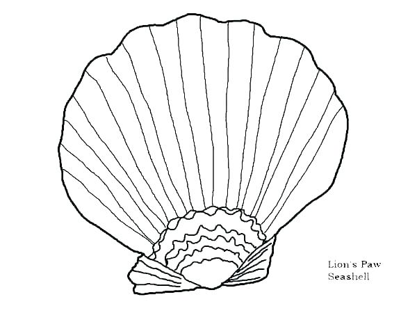 600x450 Seashell Coloring Shell Coloring Pages Sea Shell Coloring Pages