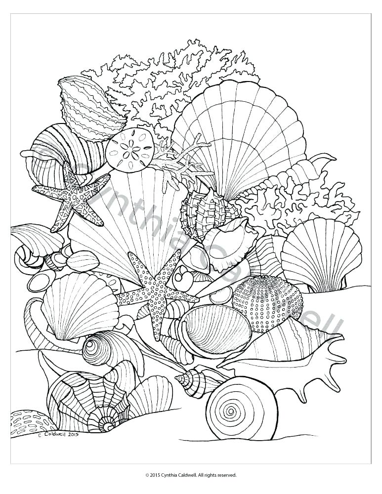 773x1000 Seashell Coloring Page