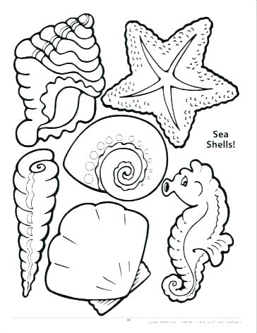364x473 Seashell Coloring Pages