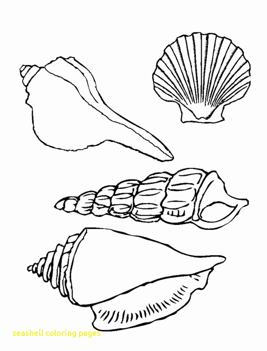850x1116 Seashells Coloring Pages Paso Evolist Seashell Coloring Pages
