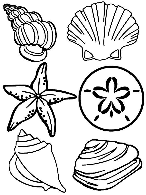 600x800 Complete Sea Shells Family Free Coloring Page