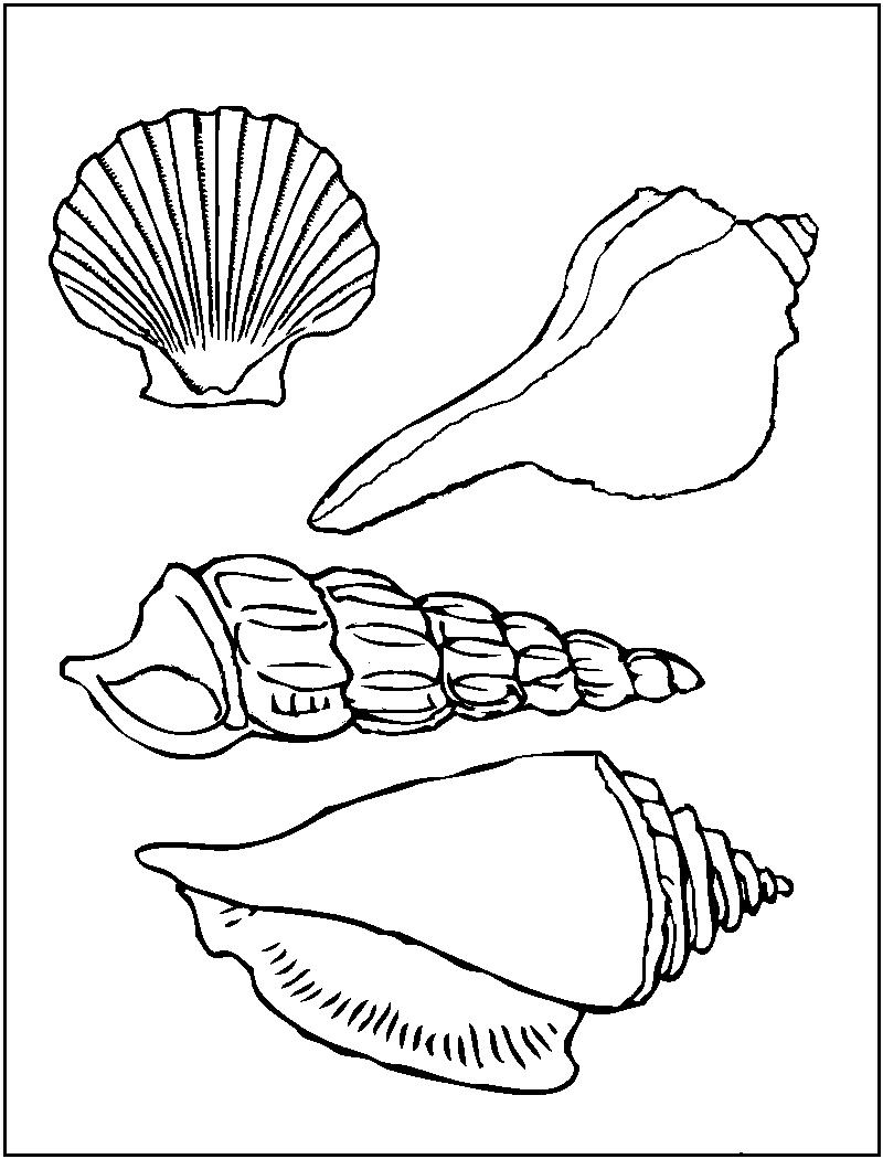 800x1050 Free Printable Seashell Coloring Pages For Kids Printable
