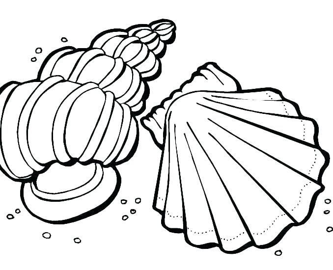 678x550 Nicodemus Coloring Page Beach Shells Coloring Pages Printable