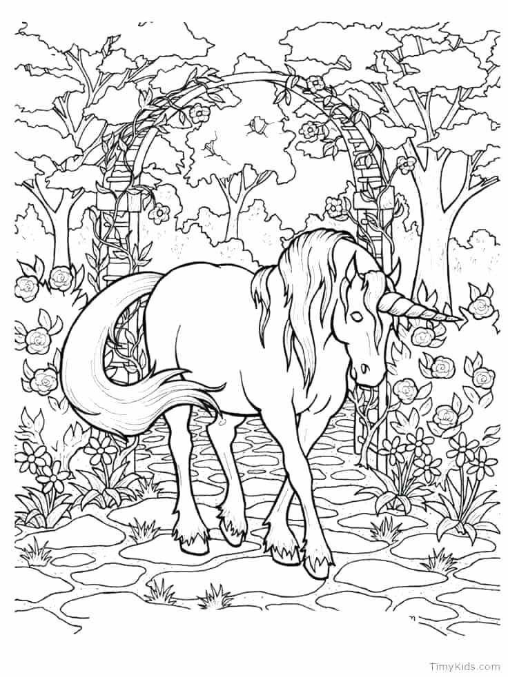 736x982 Unicorn Color Pages Unicorn Coloring Pages For Adults Unicorn