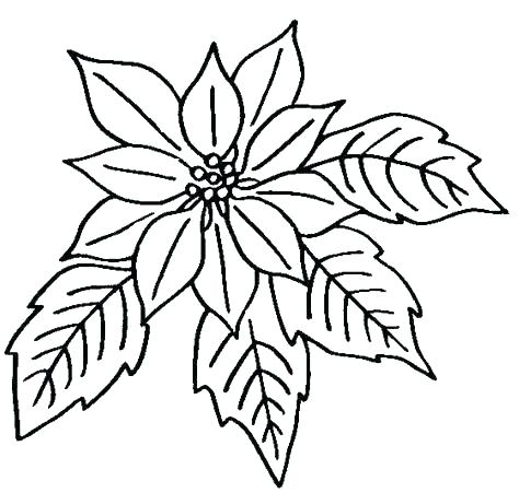 image relating to Printable Flower Coloring Pages identify Coloring Webpages In direction of Print Bouquets at  Totally free