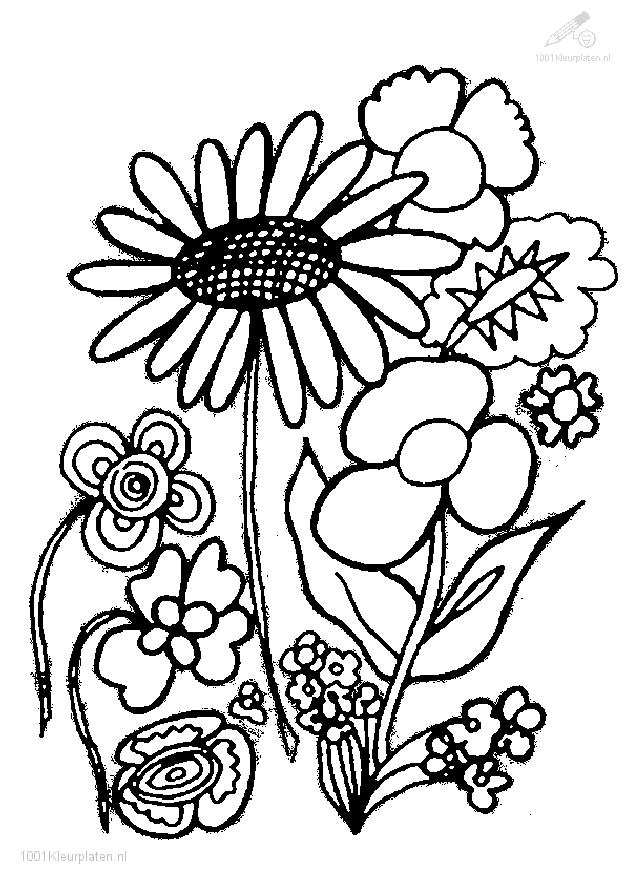 625x884 Coloring Pages Trees Plants And Flowers Amazing Plant Coloring