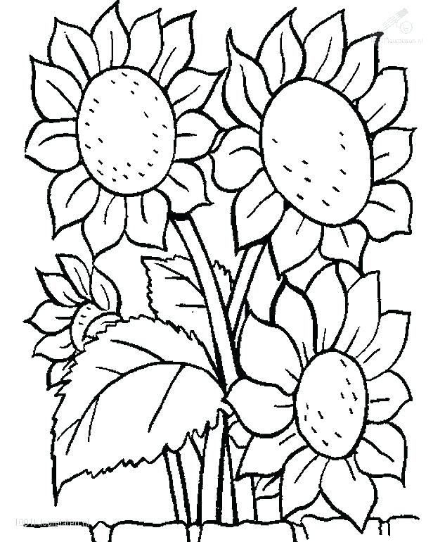 616x770 Coloring Pages Trees Plants And Flowers As Awesome More Images
