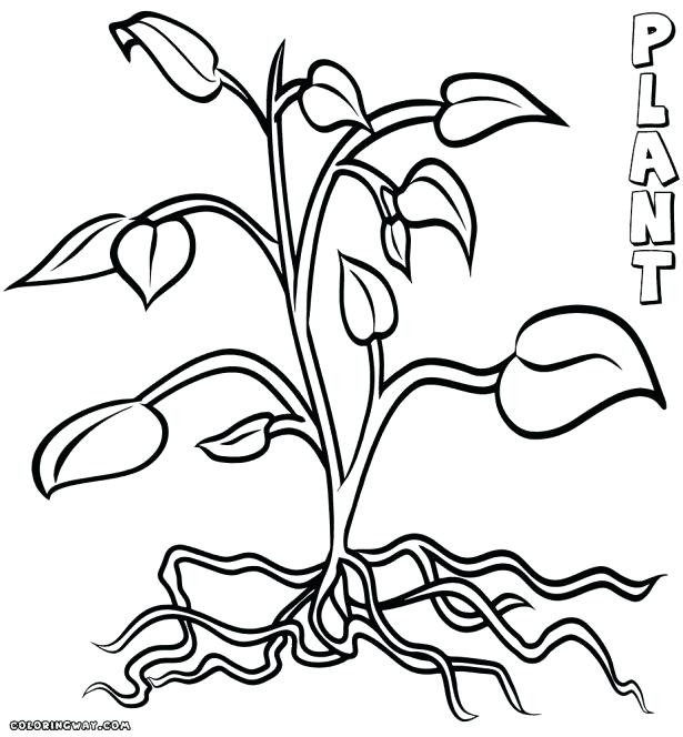 615x664 Coloring Pages Trees Plants And Flowers Delectable Coloring Pages