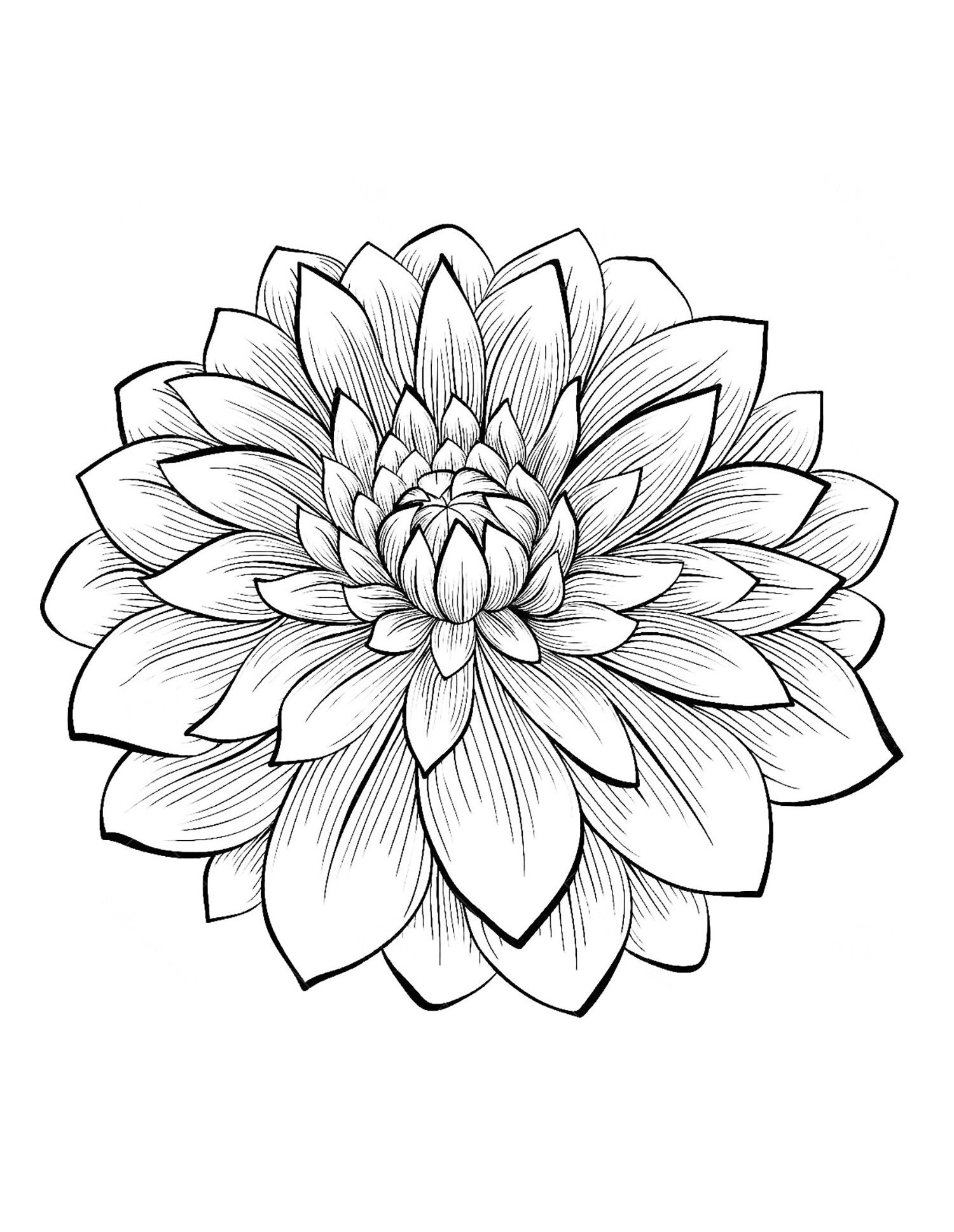 1500x1937 Incredible Dahlia Flower U Vegetation Coloring Pages For Adults