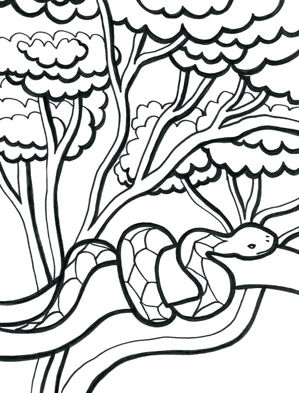 600x787 Coloring Pages Of Plants Coloring Pages Trees Plants And Flowers