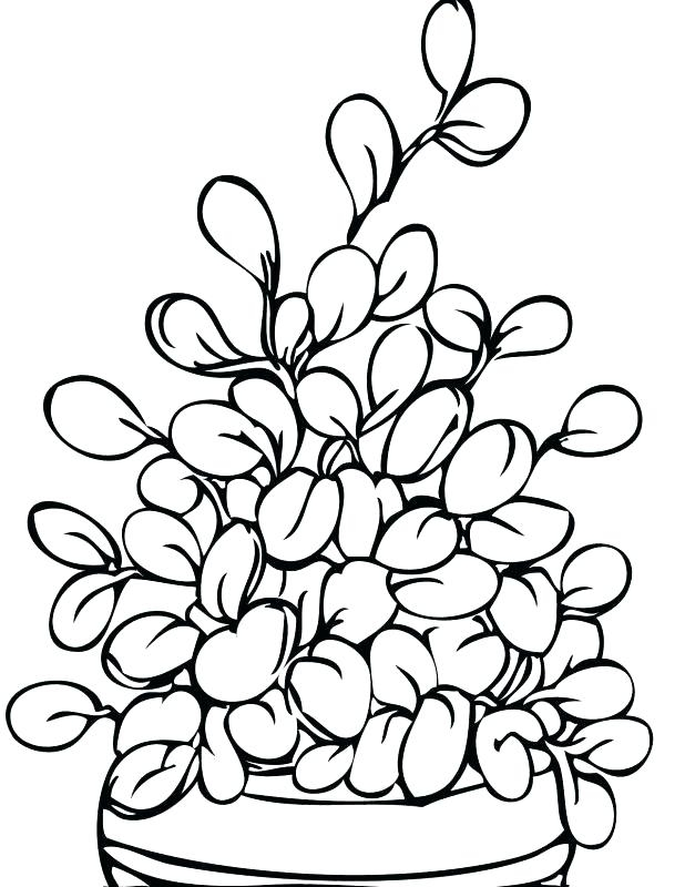 618x800 Coloring Pages Of Trees Plants And Flowers Coloring Page Zone