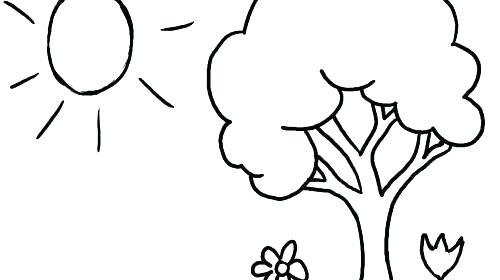 500x280 Coloring Pages Trees Plants And Flowers Vanda