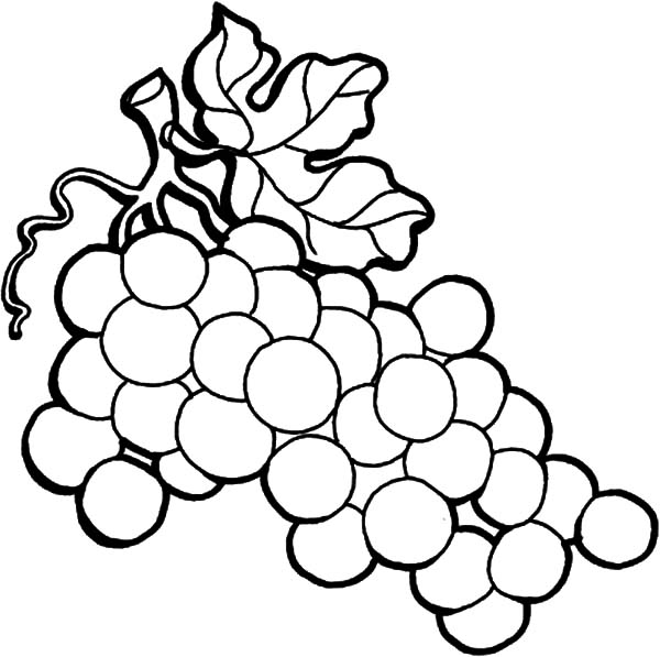 600x597 Grapes Coloring Page Grapes Coloring Page Wine Grapes On The Vine