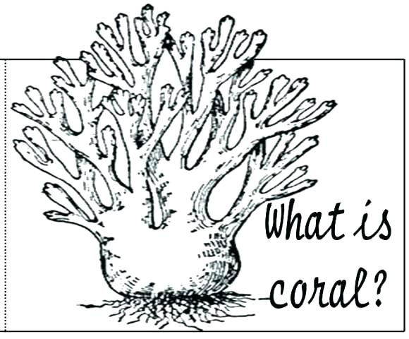 580x480 Coral Reef Coloring Page Coral Coloring Pages Coral Reef Coloring