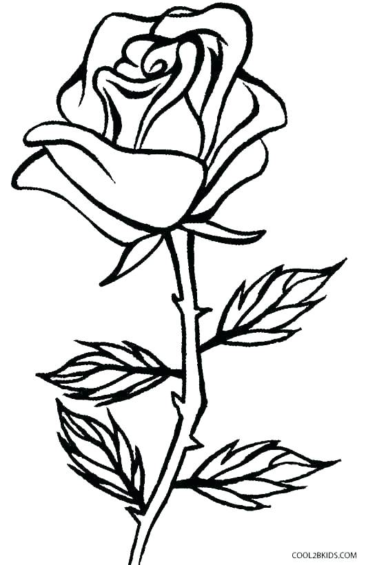 531x820 Rose Coloring Page Compass Rose Coloring Sheet Rose Coloring Page