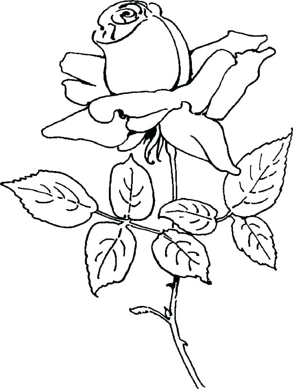 600x796 Rose Coloring Pages Printable Free Compass Rose Coloring Page Rose