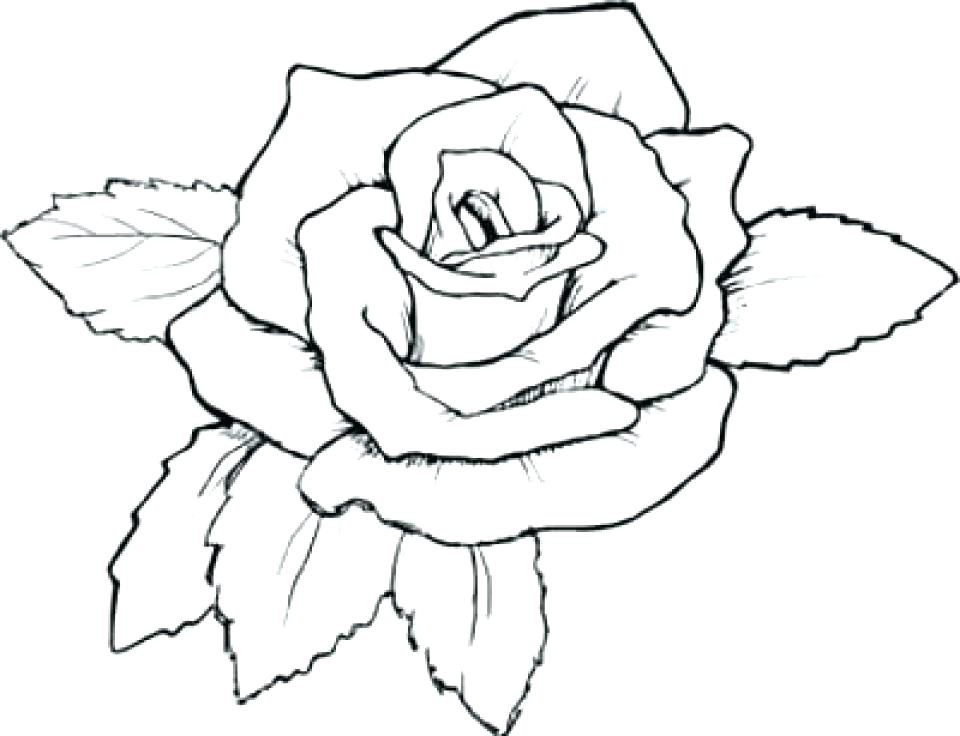960x736 Roses Coloring Page Free Roses Coloring Pages For Adults To Print