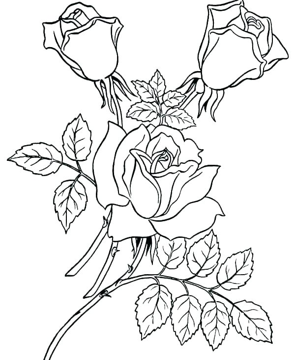 600x734 Roses Coloring Pages Compass Rose Coloring Sheet Coloring Page
