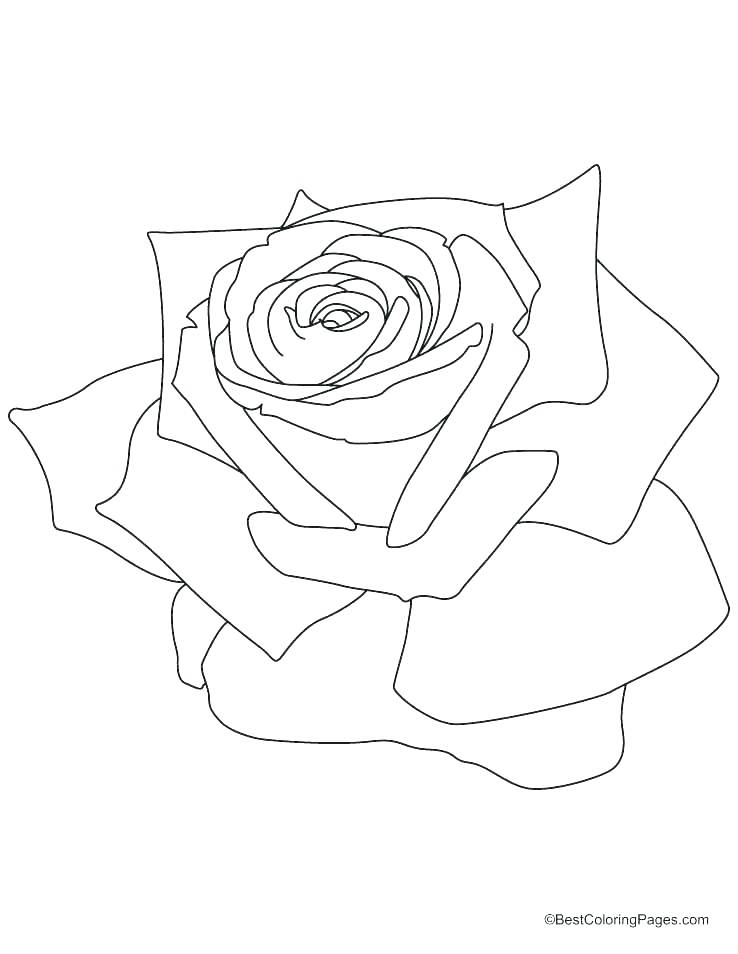 738x954 Printable Compass Rose