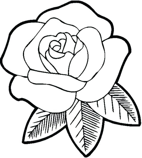 600x670 Coloring Pages Rose Roses Pictures To Color Big Beautiful Rose