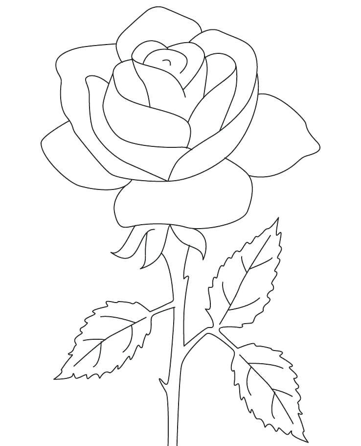 738x911 Compass Rose Coloring Sheets