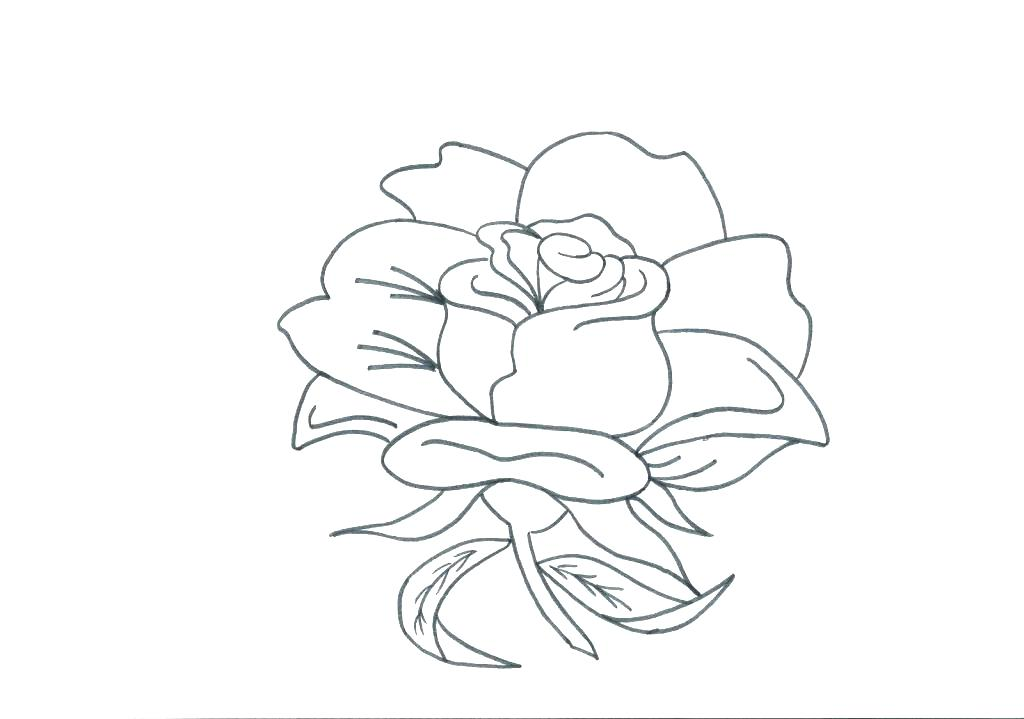 1024x719 Border Collie Coloring Pages Border Coloring Pages Roses Coloring