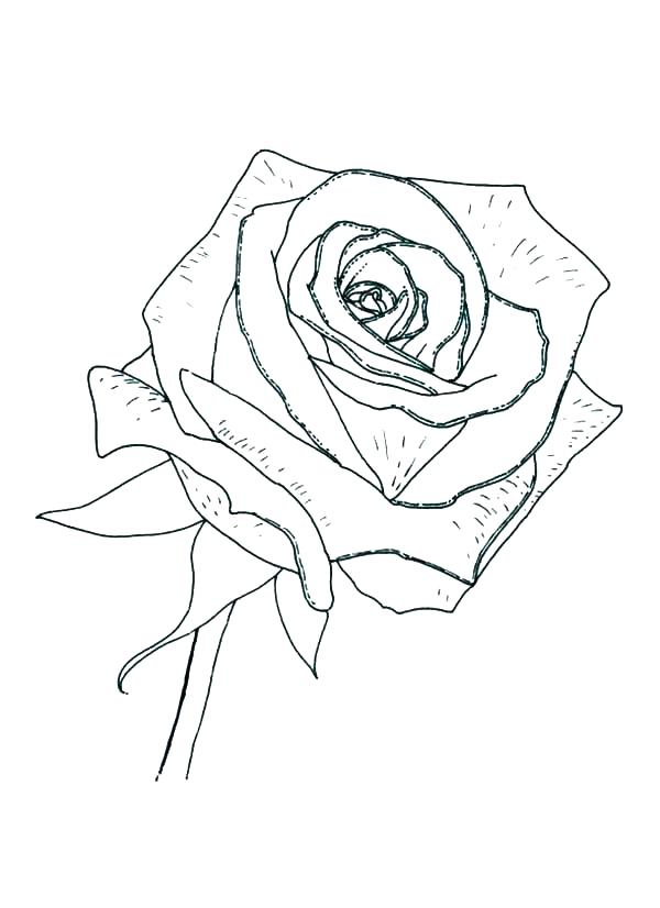 600x826 Coloring Page Rose Compass Rose Coloring Sheet Coloring Page Rose