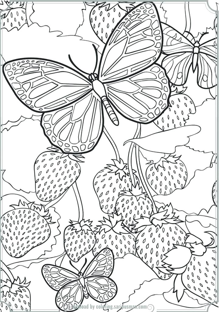 720x1024 Detailed Butterfly Coloring Pages Detailed Butterfly Coloring